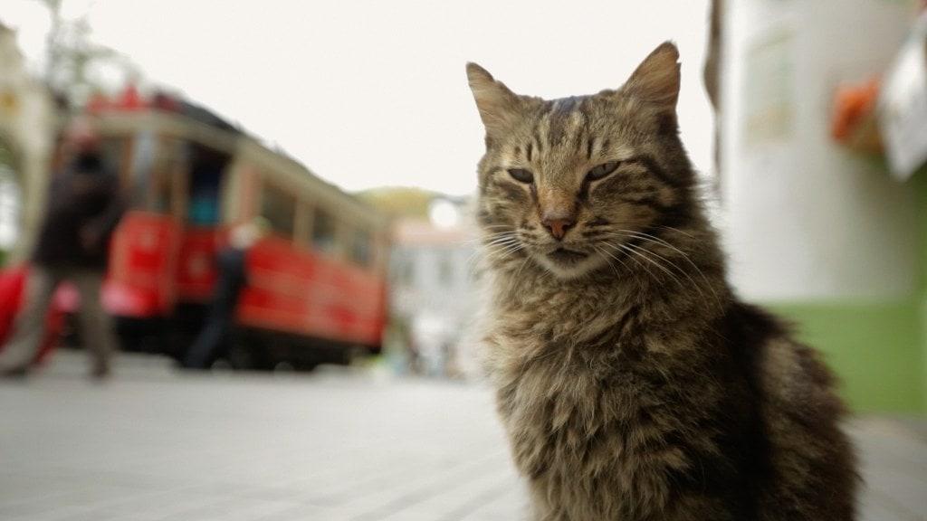 kedi-ceyda-torun