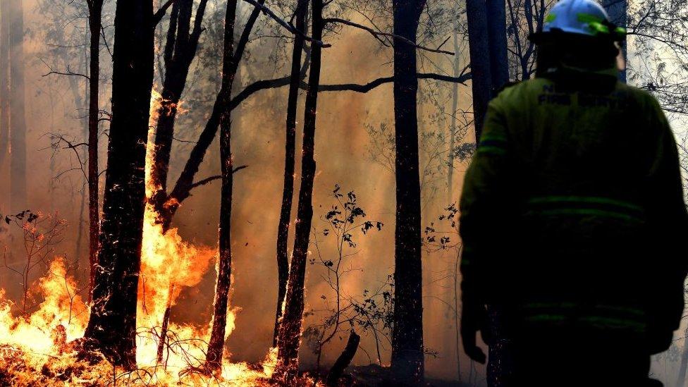 Avustralya, Orman Yangını